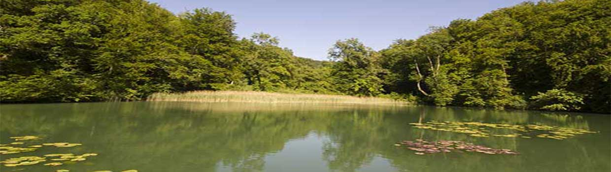 Vegetation plays an important role in balancing out the ecosystems below the water for fish and other species.