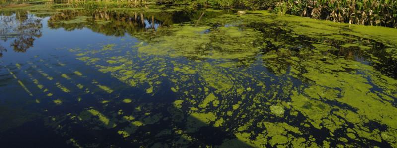 Algae Control Issues
