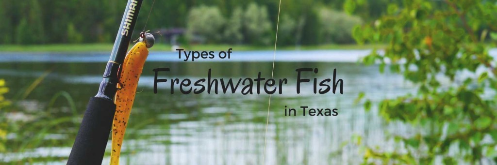 Freshwater Fish in Texas