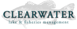 Clearwater Consulting