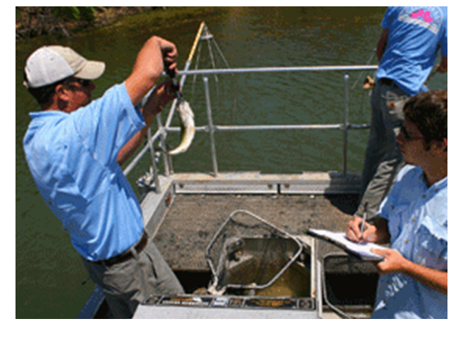 Electrofishing for Lake Management