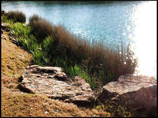 Water Vegetation can Damage Your Lake