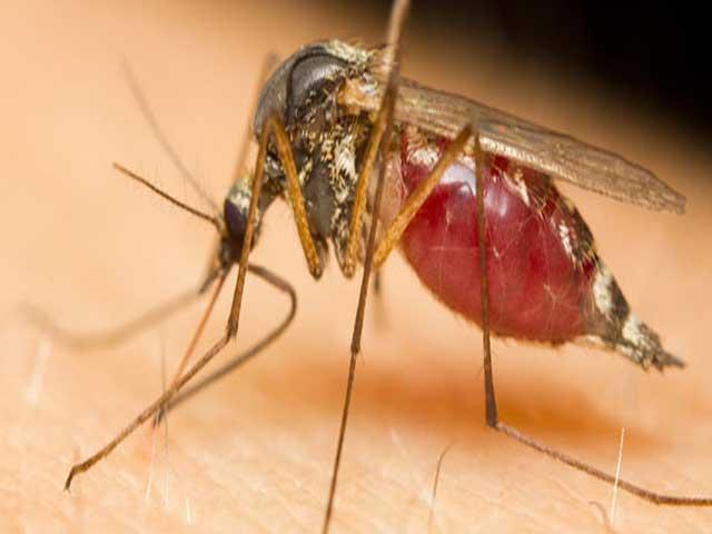 post-mosquito-controljpg