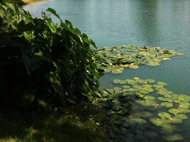 Biological Control of Aquatic Vegetation