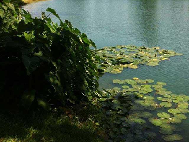 Biological Control of Aquatic Vegetation