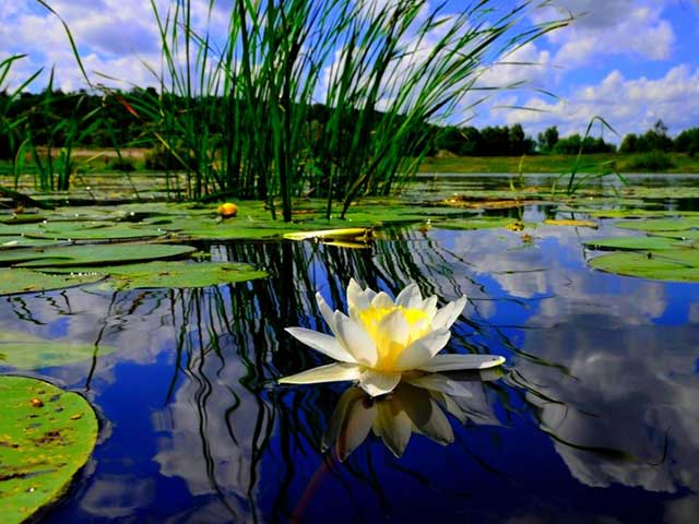 Texas Pond and Lake Design