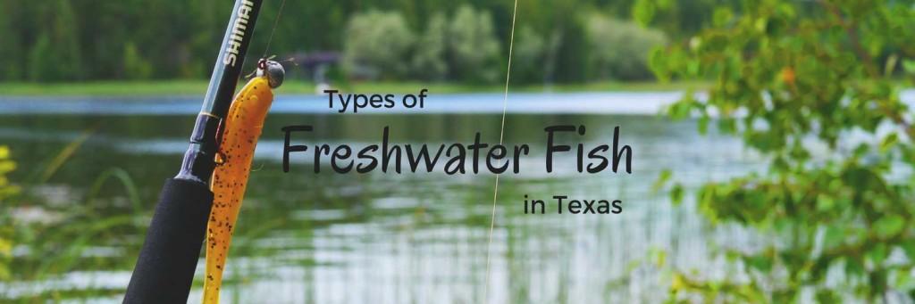 Freshwater Fish in Texas
