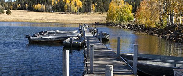 bass baiting in fall